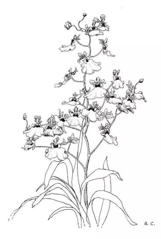 人物| 植物花卉写生3周年