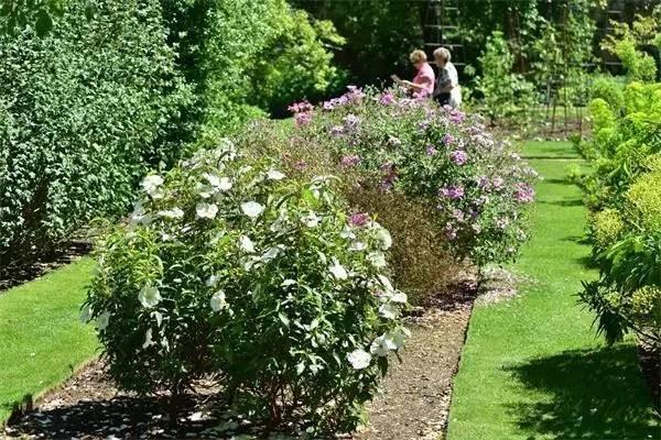 牛津大学植物园建立之初是个药草园,今天作为支撑系统的一部分,主要